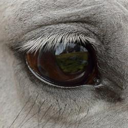 Augenheil- kunde