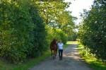Pferd_Weg